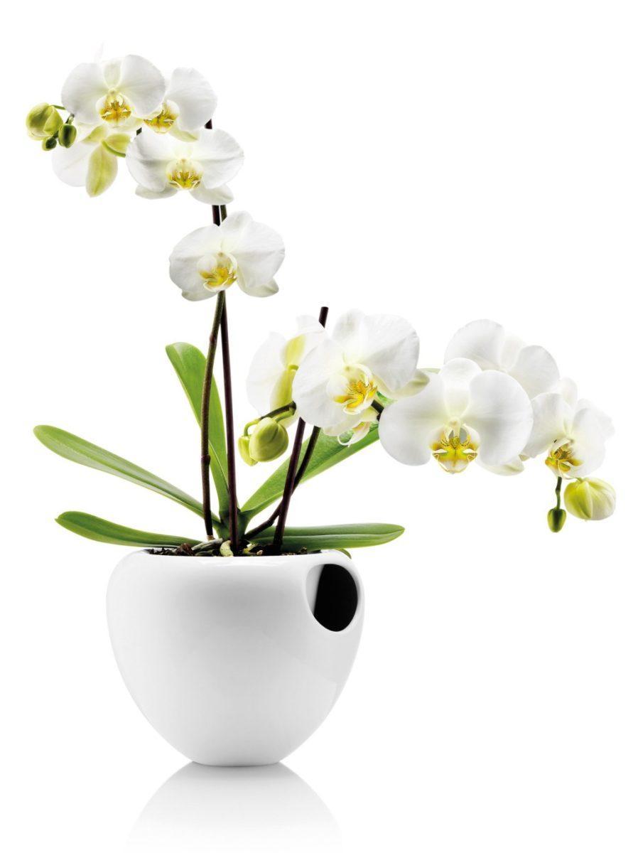 Горшок для орхидеи. Orchid Pot